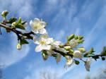 Bloom by Biutz