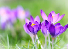 Spring Flower by Raylau