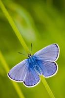 Blue butterfly. by IICI-IEII