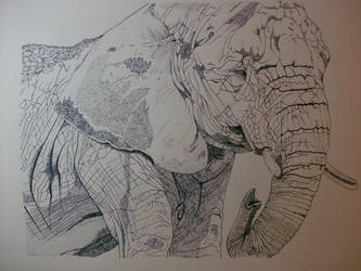 Elephant by cibroh