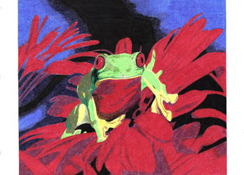 Frog by cibroh