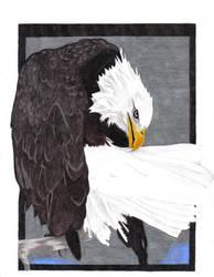 Eagle by cibroh