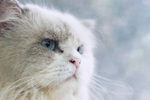 Snowbell by crucafix