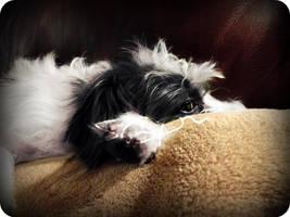 Duchess-Sleep by miuXgrimmjow1