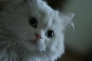 pisica by mirceabun