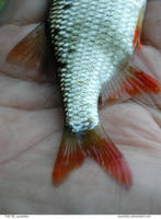 Fish 08_quaddles by quaddles