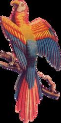 Victorian bird 5_quaddles by quaddles