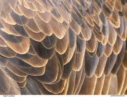 Eagle 10_quaddles by quaddles