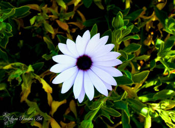 Paper flower by SaraPereiraArt
