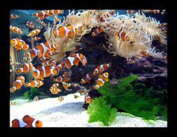 Clown Fish 2 by Gazandkim