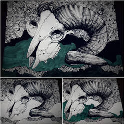 Goat Skull progression by Minda-Mouse