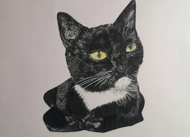 cat pen drawing  by mo0ncheese