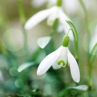 springtime by photofairy
