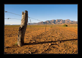 Red Gum Fence by seaworthy