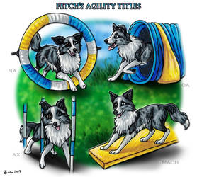 Strawberry Hills Come and Get It - Agility Titles by Bafa