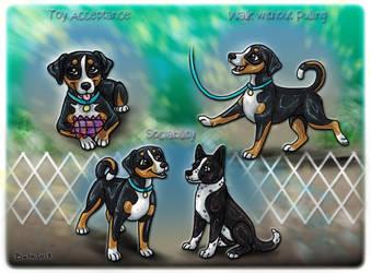Buzzi Puppy Training Program by Bafa