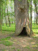 TreeHoleStock by alienjacki-stock