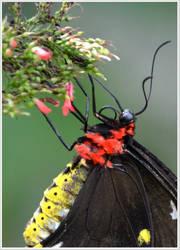 Butterfly92 by Skip1967