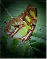 Butterfly93 by Skip1967