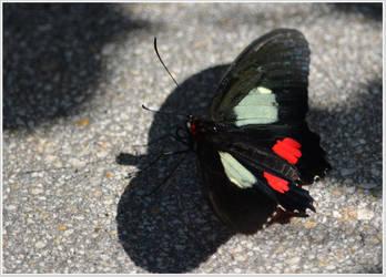 Butterfly94 by Skip1967
