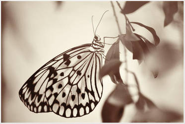 Butterfly95 by Skip1967