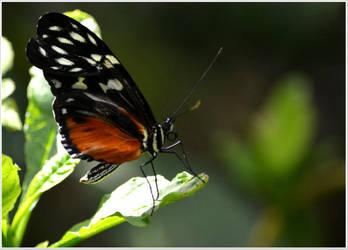 Butterfly96 by Skip1967