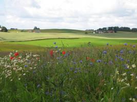Summer field by CAStock