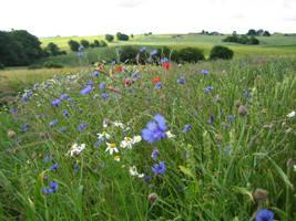 Summer field 2 by CAStock