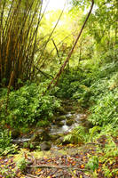 Rain forest 3 by CAStock
