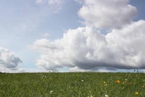 Grass 2 by CAStock