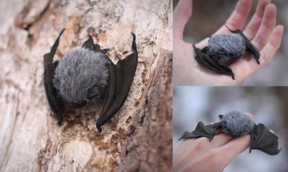 Little Bat by Irentoys