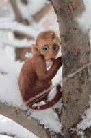 Little Monkey in the pocket by Irentoys