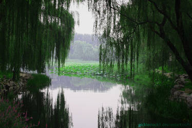 The Hanging Willows by pickleduck3