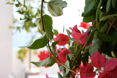 tarde rosa - pink afternoon by PurpleLegolas