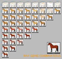 Bay Horse Genes by lXxMellodyxXl