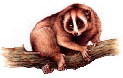 Slow Loris - Nycticebus Pygmaeus - SpeedPainting by maga-a7x