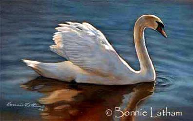 Mute Swan by bonnielatham