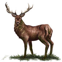 Deer in Brown and Green by CharlottaBavholm