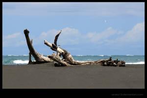 Driftwood by Araka13