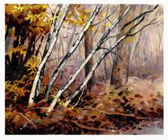A Woodland Walk by JohnPatience