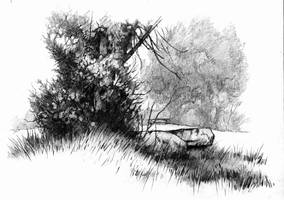 Evergreen by JohnPatience