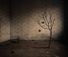 The Abandoned... Cottons Tree by Cakobelo