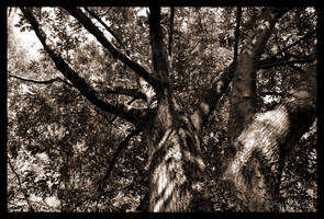 Barrel of a Tree by Esmerelde