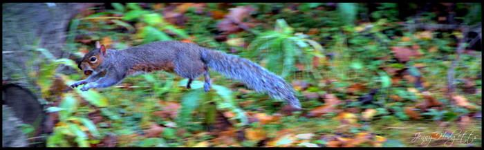 Leaping Squirrel by Esmerelde