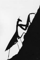 Mantis by 07Frank