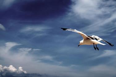seagulls sound so sad by GeneralRen