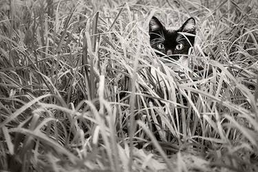 stalker by shtrumf