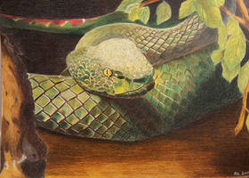 Green snake by Rocksane-Art