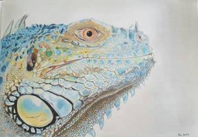 Blue Iguana  by Rocksane-Art