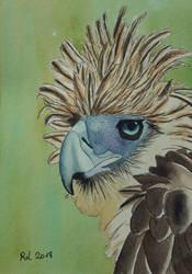 Philippine eagle by Rocksane-Art